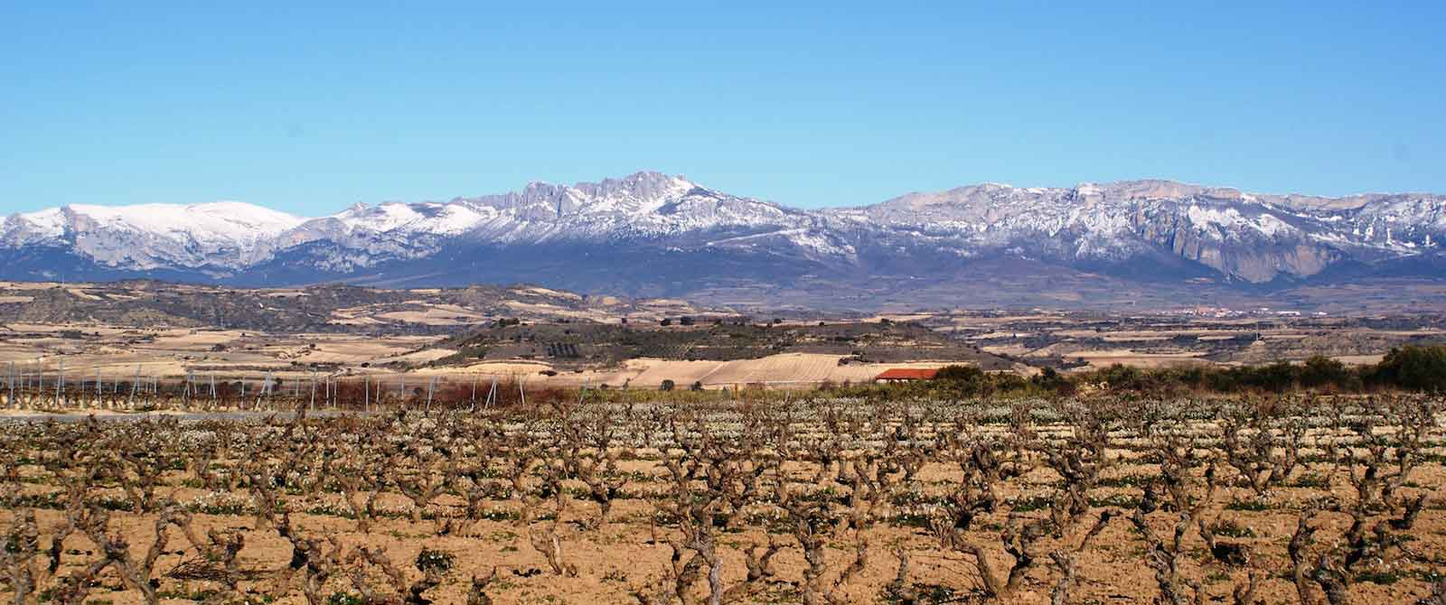 Vineyard in La Rioja with mountians