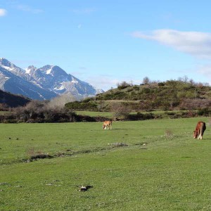Horses in Picos de Europa during bicycle tours of Asturias