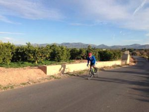 Bike tours in Spain - cycling is orange groves